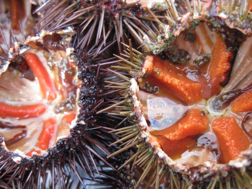 Platos típicos de Denia: Los erizos de mar